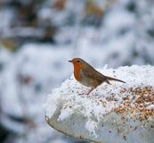 Robin on feeder in snow Stock Photos
