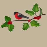 Robin and a holly tree branch Stock Images