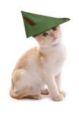 Robin hood kitten. Studio cutout Stock Photo