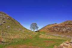 Robin Hoods Tree. Hadrian's Wall Wide Angle Capture of Sycamore Gap, a section of Hadrians Wall between two crests in Northumberland, England is locally known as royalty free stock photography