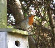 Robin on nest box Royalty Free Stock Photo
