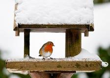 Robin på en snöig fågelförlagematare i vinter Arkivfoton