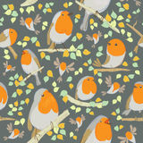 Robin pattern. Cartoon birds. Stock Photos