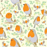 Robin pattern. Cartoon birds. Royalty Free Stock Photo