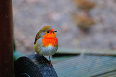 Robin perched on a small wheel. Royalty Free Stock Images