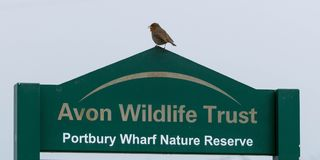 Wildlife trust sign with Robin Royalty Free Stock Photography