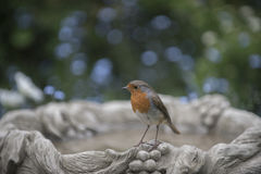 Robin redbreast. In a beautiful garden Royalty Free Stock Photos