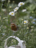 Robin redbreast. In a beautiful garden Stock Photos