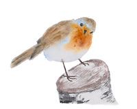Robin redbreast bird watercolor illustration. Royalty Free Stock Photo