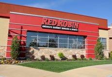 Robin rosso nell'Utah Fotografia Stock