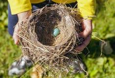 Robin's Egg Royalty Free Stock Photography