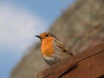 Robin se reposant sur la barrière Photo libre de droits