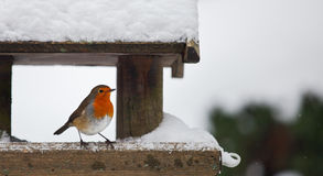 Robin at a snowy bird feeder in winter. A red robin at a snow-covered bird house in winter. Photo has short depth of field and space for your text royalty free stock image
