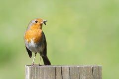 Robin Stock Photography