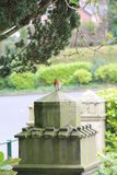 Robin on a stone plinth. Robin bird on a stone plinth Stock Image