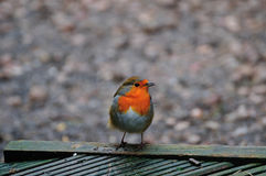 Robin streek bij het decking neer stock afbeeldingen