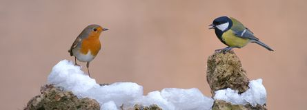 Robin and Tit