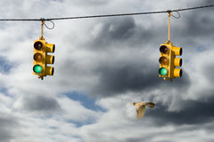 Robin And Traffic Lights Royalty Free Stock Images