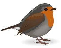 Robin. Vector illustration of a Robin bird Stock Photos