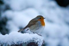 Robin-Vogel heraus im Schnee Lizenzfreies Stockbild
