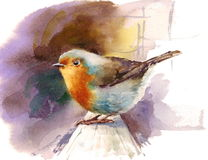 Robin Watercolor Bird Illustration Hand målade Royaltyfri Fotografi