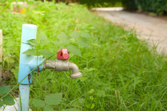 robinet dans le jardin Image libre de droits