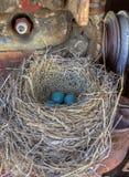Robins bygga bo i gammal traktor Arkivfoto