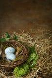 Robins Nest Stockbild