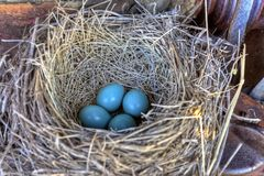 Robins nest in old tractor Royalty Free Stock Photography