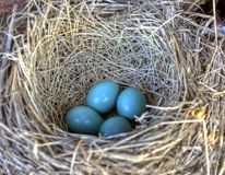 Robins nest in old tractor Royalty Free Stock Images