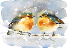Robins Watercolor Winter Bird Illustration Hand Painted Stock Image