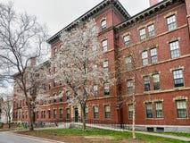 Robinson Hall dans la cour de Harvard de l'Université d'Harvard Cambridge Images stock