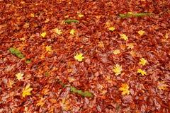 Roble anaranjado y hojas de arce amarillas en la tierra con las raíces verdes del musgo Imagen del otoño del follaje checo del ot Fotos de archivo libres de regalías