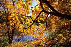 Roble colorido de los árboles del otoño en parque Fotos de archivo libres de regalías