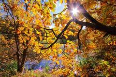 Roble colorido de los árboles del otoño en parque Imágenes de archivo libres de regalías