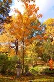 Roble colorido de los árboles del otoño en parque Fotos de archivo