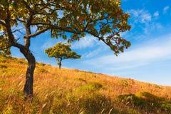 Roble del otoño Imagen de archivo libre de regalías