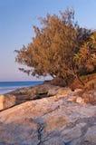 Roble en la costa australiana imagen de archivo libre de regalías