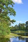 Roble sobre el lago Foto de archivo libre de regalías
