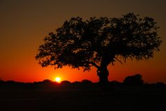 Roble vivo de la puesta del sol Imagenes de archivo
