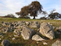 Roble y rocas del Ca Fotos de archivo libres de regalías