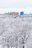 Robles de la nieve en bosque y ciudad en día de invierno Imagen de archivo