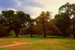 Robles de los árboles en el parque en el otoño (bosque de Epping) Imagen de archivo
