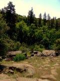 Robles de Sierra Imagenes de archivo