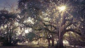 Robles y Sun Fotografía de archivo libre de regalías