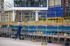 Robociarz w Holenderskiej szklarni z opakunkowymi up pieprzami Obrazy Stock