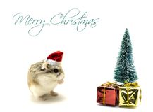 Roborovski hamster with Santa Claus hat standing in front of the Christmas tree stock photography