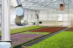 The robot arm in a greenhouse stock images