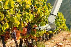 The robot arm is working in the vineyard. royalty free stock photography