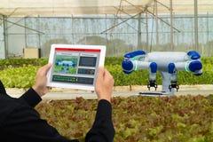 Robot astuto 4 di industria di Iot 0 concetti dell'agricoltura, l'agronomo industriale, agricoltore che per mezzo della compressa Fotografie Stock
